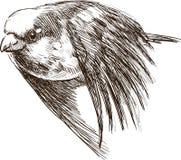Воробей летания Стоковое Изображение