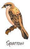 Воробей, иллюстрация цвета Стоковое Изображение RF