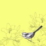 воробей лилии Стоковые Изображения RF