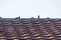 Воробей на крыше Стоковое фото RF
