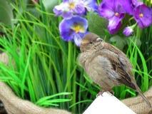Воробей на предпосылке цветков весны Принципиальная схема экологичности и окружающей среды Стоковое Фото
