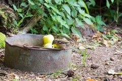 Воробей на яблоках ведра Стоковые Фотографии RF