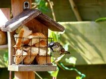 Воробей подавая на birdhouse Стоковые Изображения RF