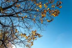 15 воробьев на дереве осени Стоковое фото RF