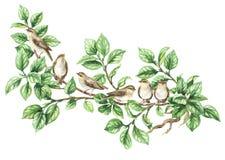 Воробьинообразная птица акварели на ветви дерева Стоковая Фотография