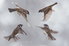 воробьи в небе в пурге Стоковые Фото