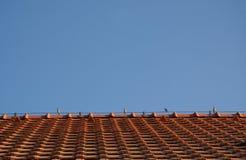 Воробьи на крыше Стоковое Изображение