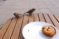Воробьи на таблице в кафе, воробьи и пирожное на таблице в кафе на улице Стоковое Фото
