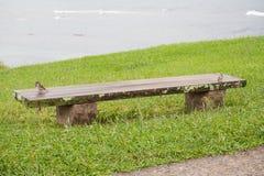 2 воробья на стенде Стоковая Фотография