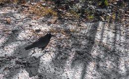 Ворона в ноябре Стоковые Изображения