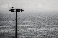 Ворона в панораме Izmir Турции Стоковое Изображение
