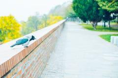 Ворона в парке в дне осени Стоковое Изображение