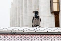 Ворона в своем клюве держит гайку Стоковое фото RF