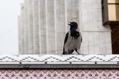 Ворона в своем клюве держит гайку Стоковые Изображения RF