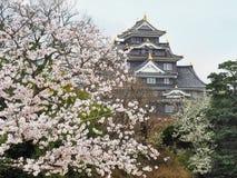 Ворона замка Okayama бросила во время сезона цветеня Сакуры Стоковое Изображение