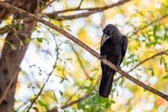 Ворона на ветви стоковые фото