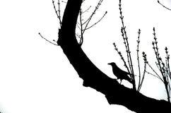 Ворона на ветви Стоковая Фотография RF