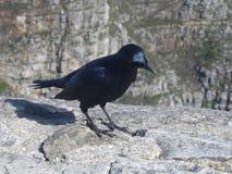 Ворона на горе Стоковые Изображения