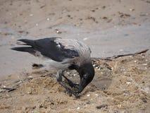 Ворона на дереве Стоковые Изображения RF