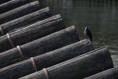 Ворона на журнале Стоковые Изображения RF