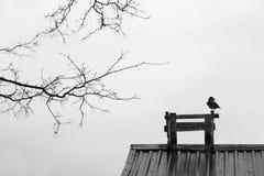 Ворона на крыше стоковая фотография rf