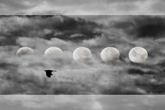 Ворона редактирует Стоковые Фотографии RF