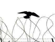ворона сиротливая Стоковые Фото