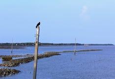 ворона сиротливая Стоковые Фотографии RF