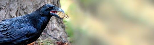 ворона украла дозор на предпосылке природы filch заречье moscow один панорамный взгляд стоковые изображения rf