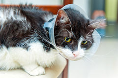 Воронка больного кота нося Стоковая Фотография RF
