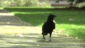 Вороны в парке акции видеоматериалы