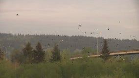 Вороны в парке сток-видео