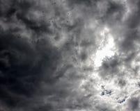 вороны в печальном настроении серого цвета осени неба Стоковые Изображения RF