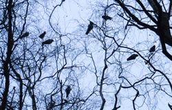 Вороны в утре Стоковые Фото