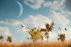 Вороны летают Стоковая Фотография