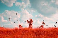 Вороны летают Стоковые Изображения