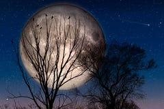 Вороны ждать на дереве Стоковые Изображения RF