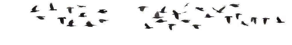 Вороны и галки Стоковое Изображение RF