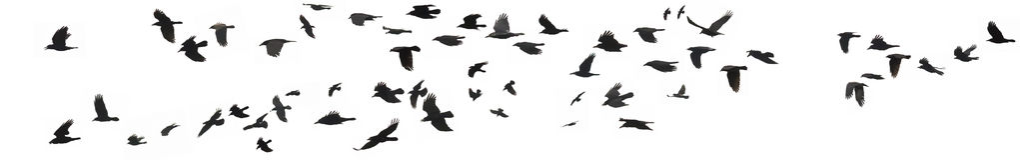 Вороны и галки Стоковые Фото