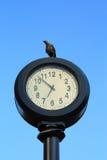 вороны приурочивают наблюдать Стоковая Фотография RF