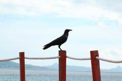 Ворон на борту Стоковое Фото