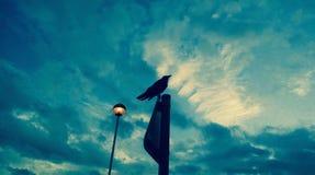 Ворон на высоком поляке смотря вверх Стоковое Изображение