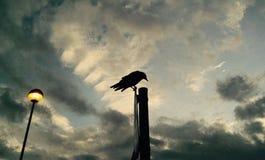 Ворон на поляке смотря вниз Стоковые Фото