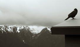Ворон, олимпийские горы стоковое изображение rf