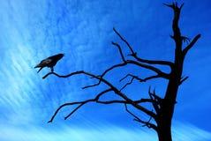 Ворон сидя на сухой ветви Стоковое Изображение