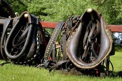 Воротники и проводки лошади Стоковая Фотография