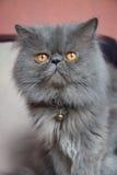 ворот кота стоковая фотография