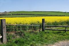 Ворот к полям золота Стоковая Фотография RF