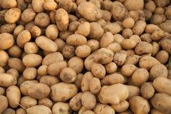 Ворох картошек стоковое изображение
