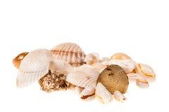 Ворох seashells Стоковое фото RF
